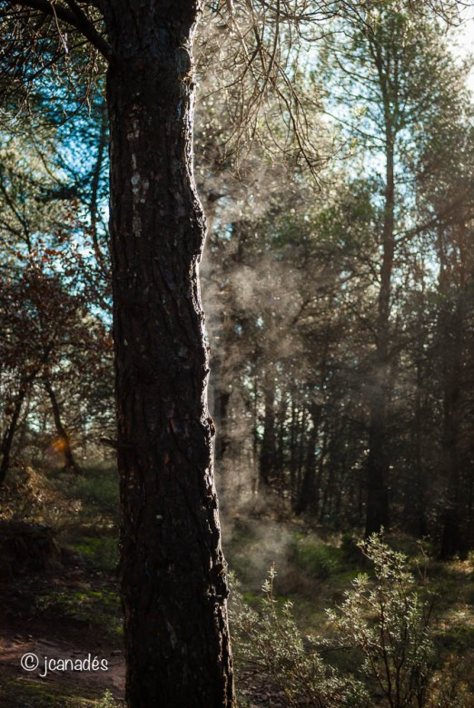 El sol escalfa l'escorça de l'arbre i n'evapora la humitat